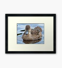 Did You Say... Smile!!... - Grey Teal Duck - NZ Framed Print