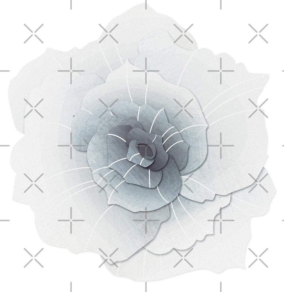 White Rose by Olivia Tinguely