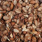 Argan shells by mindfulmimi