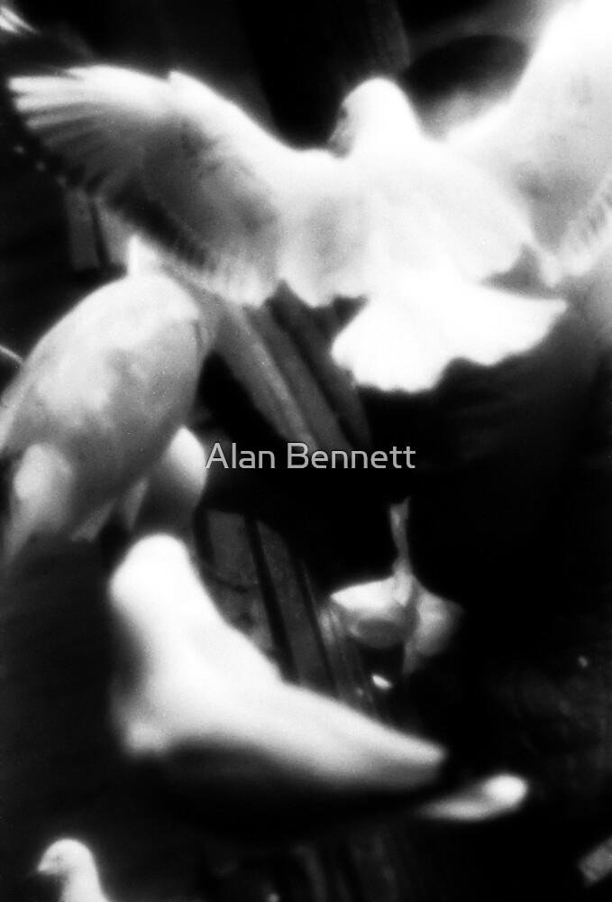 Angel Bird by Alan Bennett