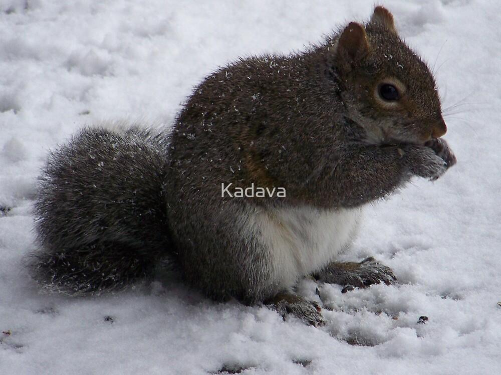 Squirrel by Kadava