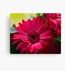 Pink Daisy Details Canvas Print