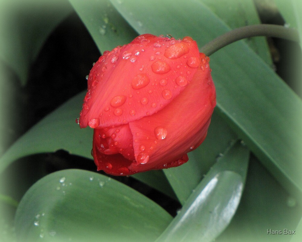 Spring Jewels by Hans Bax