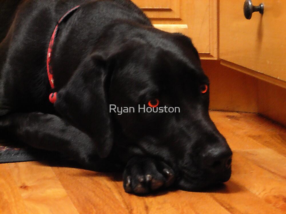 The Mastador by Ryan Houston