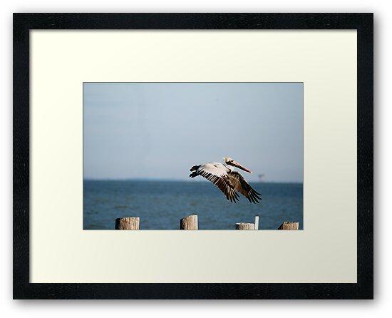 Flying In by Anne Smyth