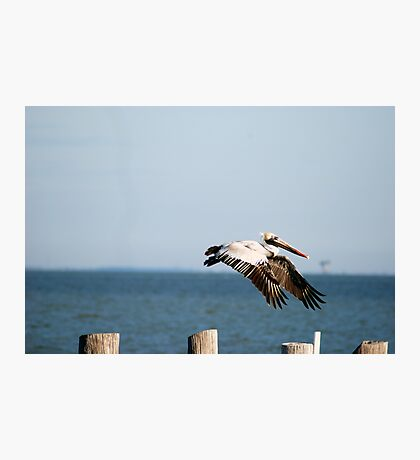 Flying In Photographic Print