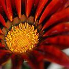 Red flower by julie08