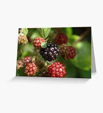 blackberries Greeting Card
