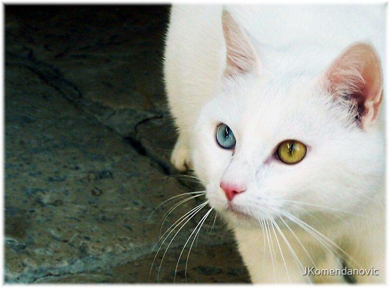 ...beautiful eyes... by JKomendanovic