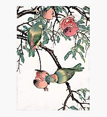 Pomegranate and Lovebirds Photographic Print