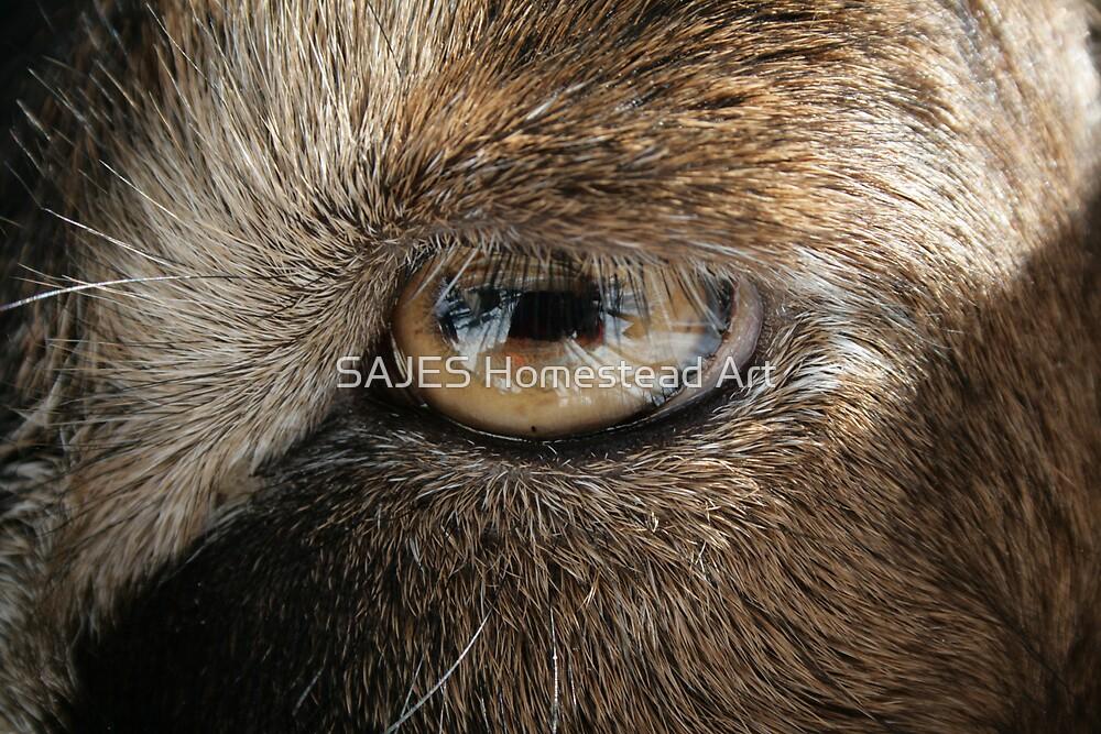 Eye Goat You by Sue Thompson