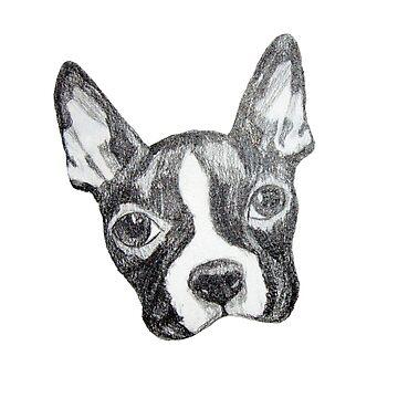 Boston Terrier - Ace by ArtbyMinda