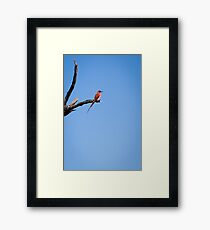 Blue skies and bee eaters Framed Print