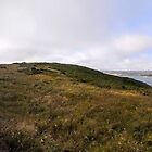 Tomales Bay State Park  by Laura Puglia