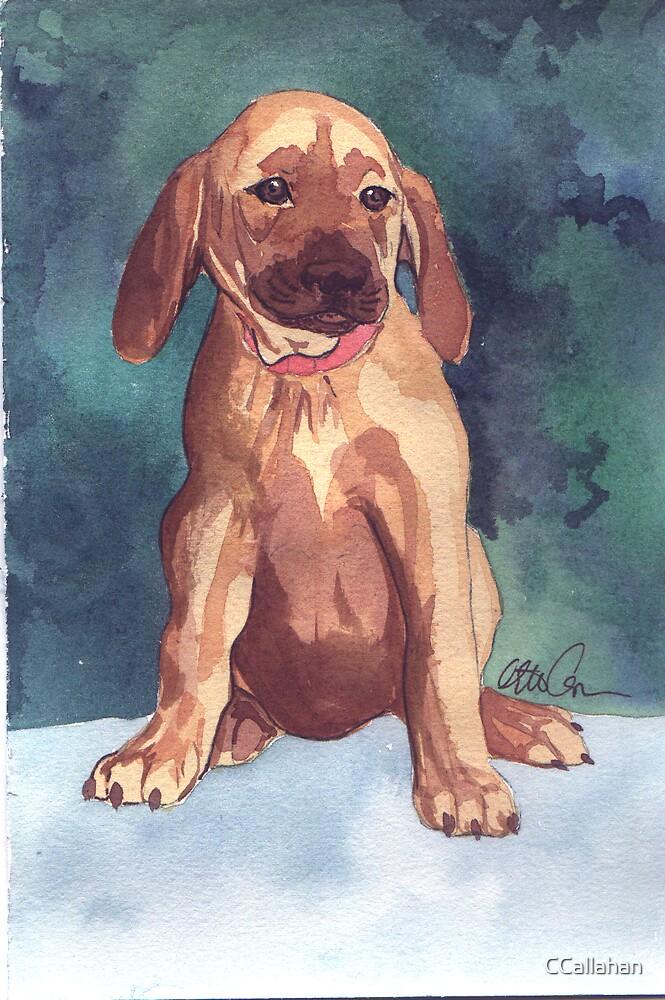 Cute Puppy watercolor by CCallahan