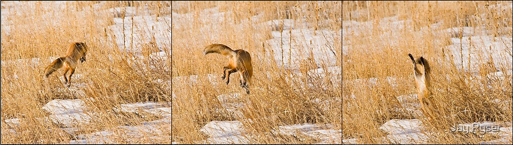 Red Fox Triptych by Jay Ryser