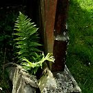Fern behind the gravestone. by Livvy Young