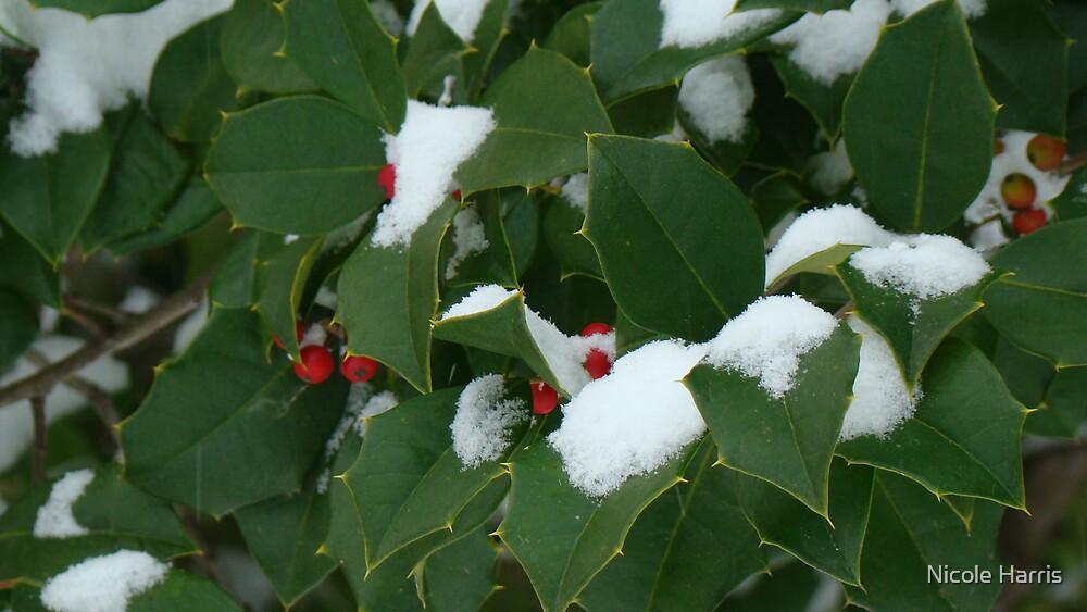 Winter holly by Nicole Harris