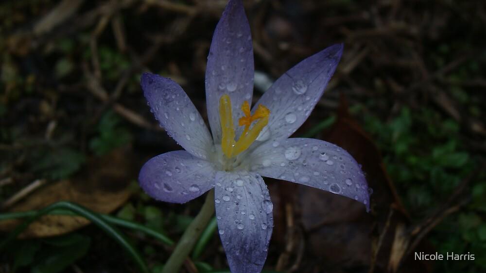Bloom in rain by Nicole Harris