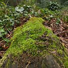 Mossy trunk. by Livvy Young