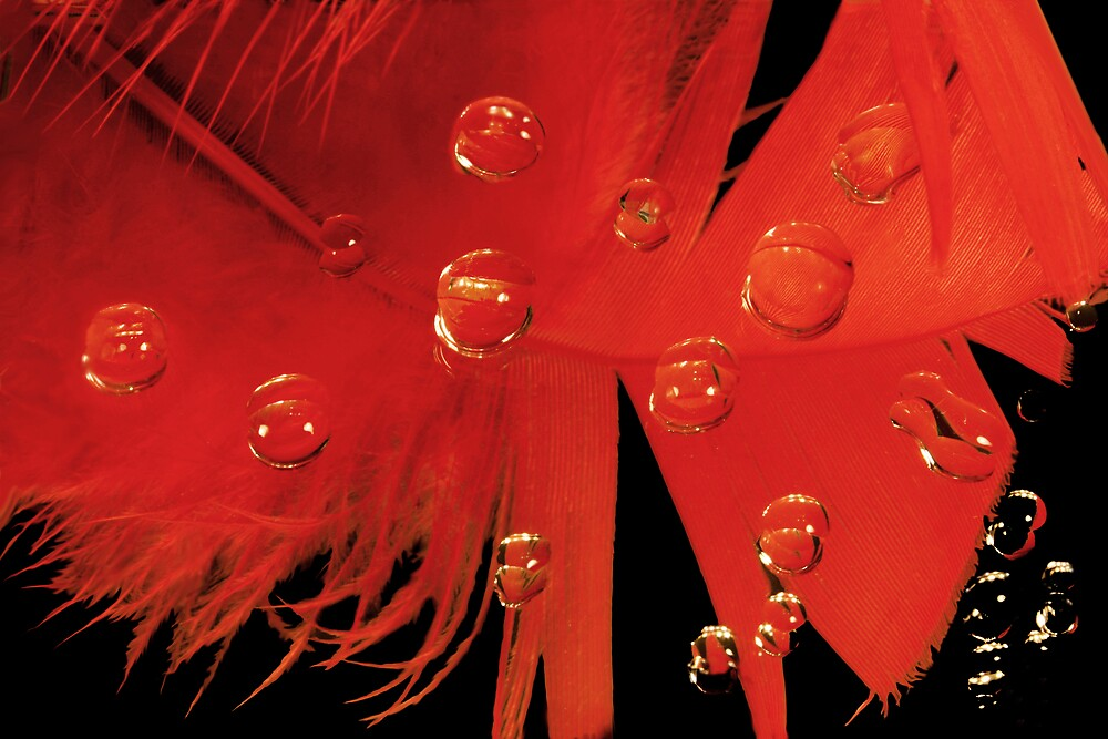 Red Feather with Water Drops by Ken Fortie