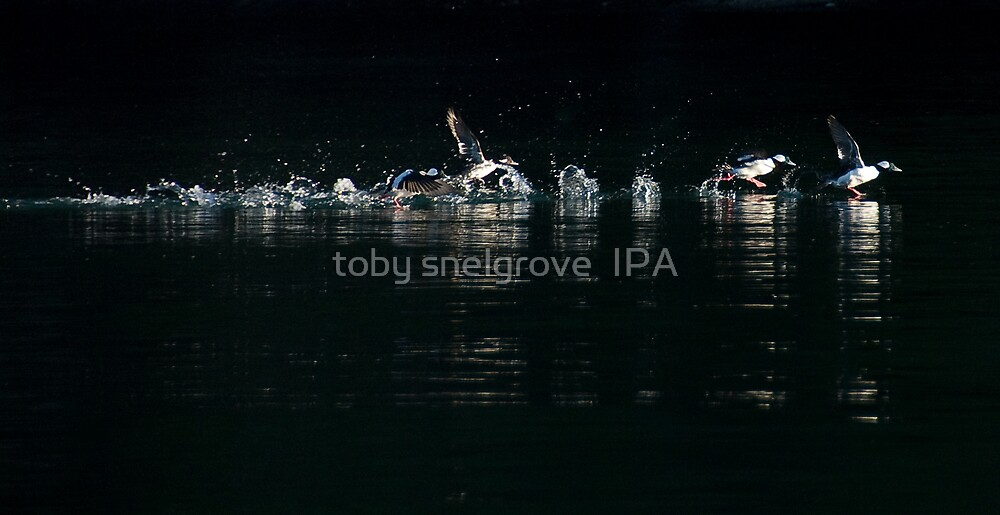 The Takeoff by toby snelgrove  IPA