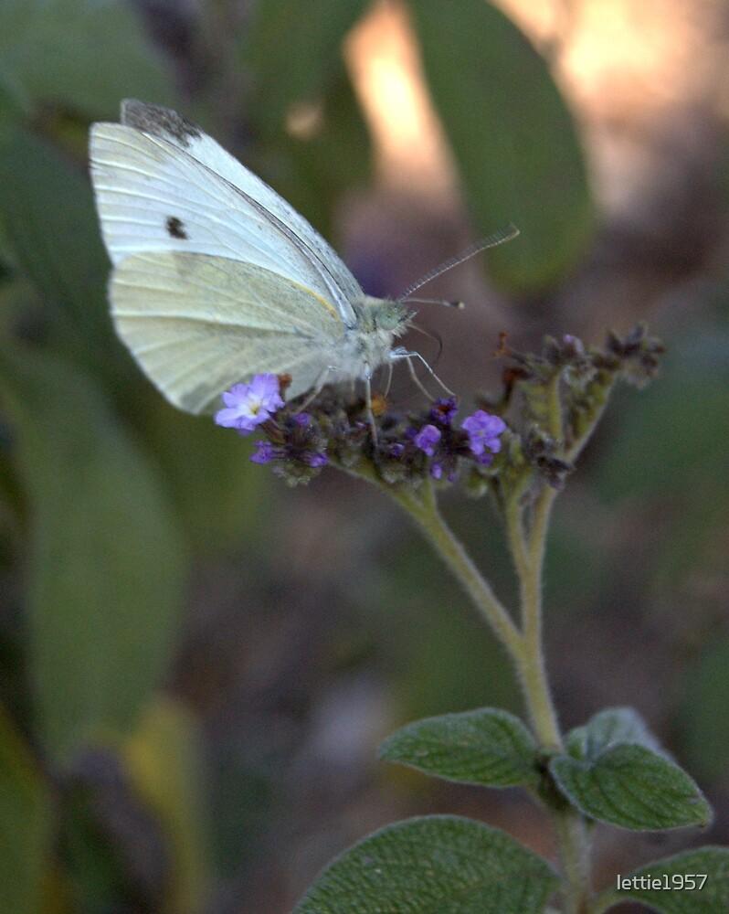 butterfly on flower by lettie1957