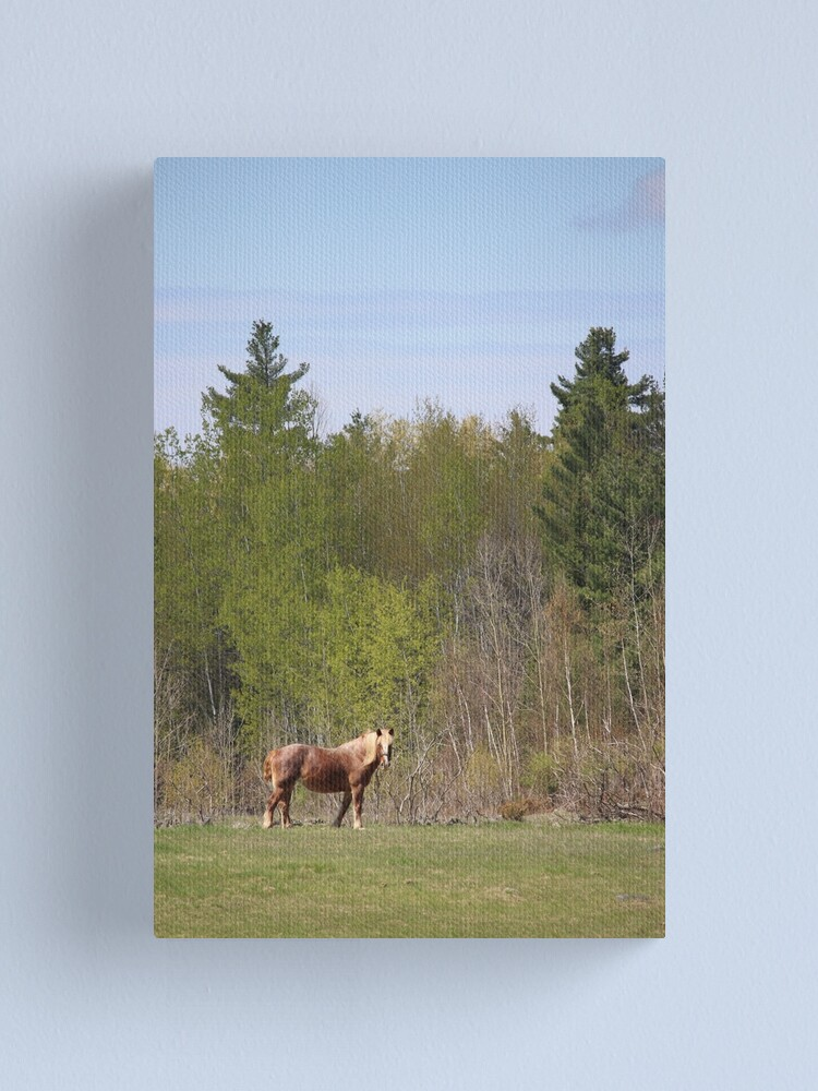 Alternate view of Horse dreams Canvas Print