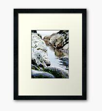 Rock Pool, Sand Bay Framed Print