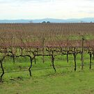 Winter vines by Jeanette Varcoe.