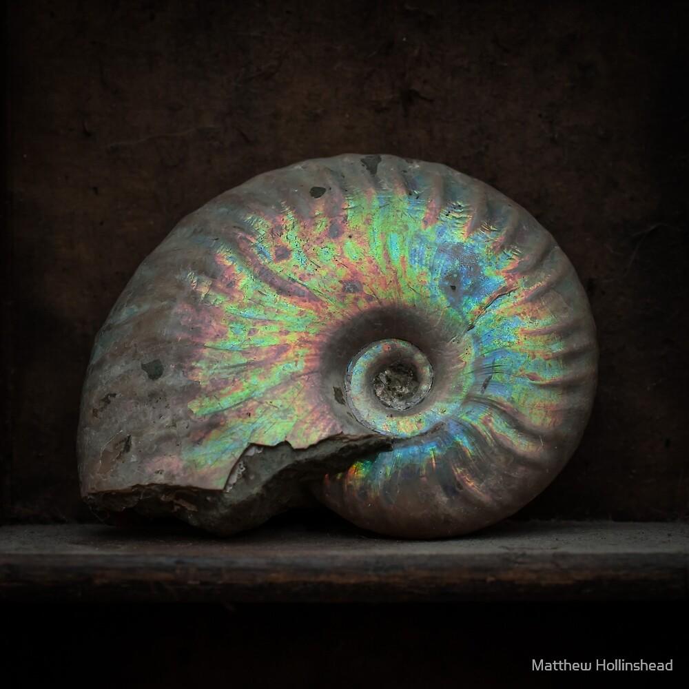 Ammonite Shell Fossil by Matthew Hollinshead