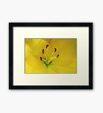Yellow Lily Macro Framed Print