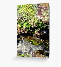 Tidal Pool Greeting Card