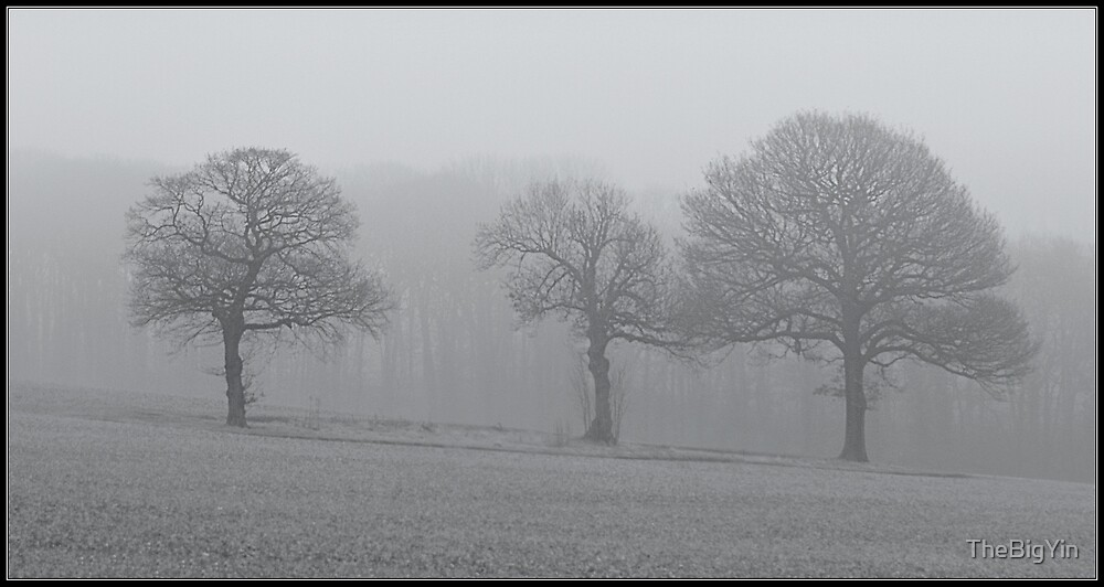 Trees in the Mist by TheBigYin