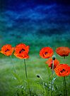 Poppies paradise  by LudaNayvelt