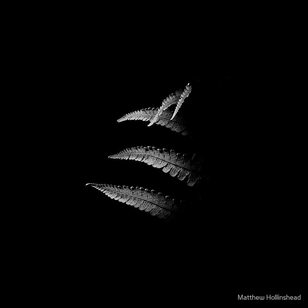 Fern No. 03 by Matthew Hollinshead