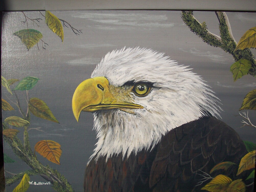 Bald Eagle by bullerwell
