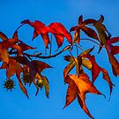 Autumn Leaves by Bette Devine