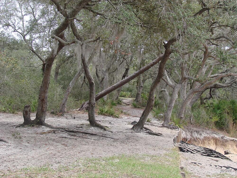 Ocala Trails by jader