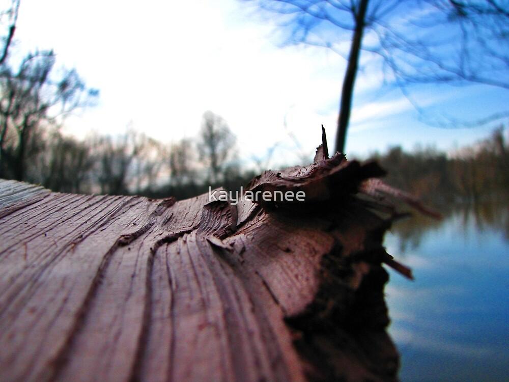 Cedar by kaylarenee