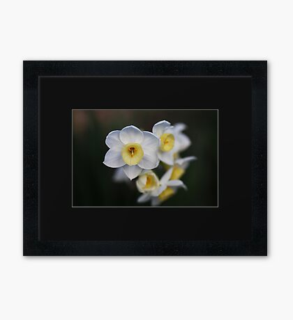 Beautiful White Jonquil Flowers Framed Print