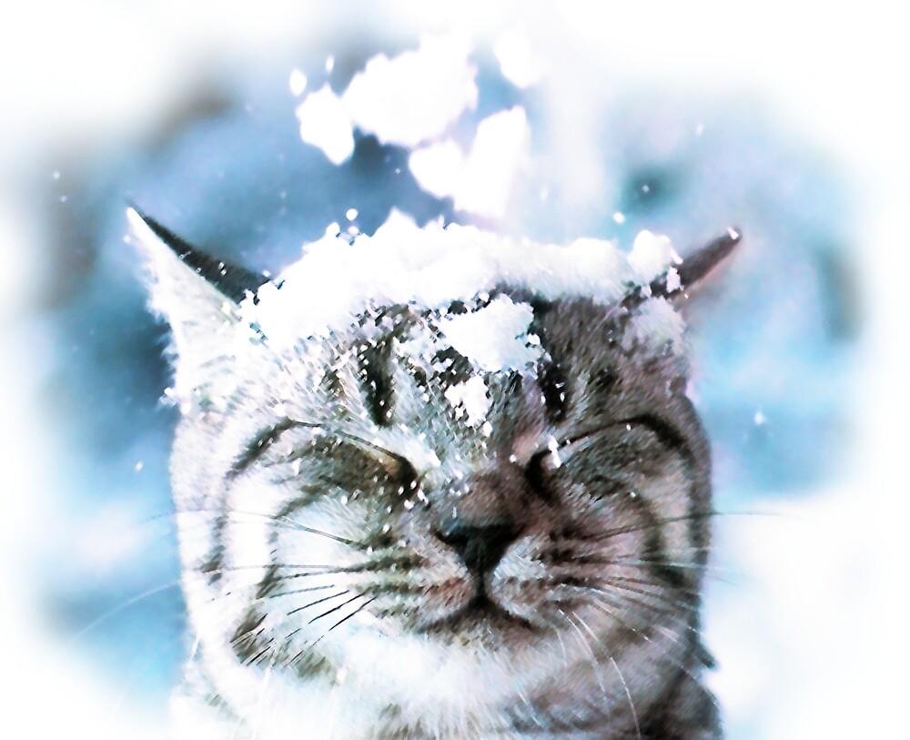 Snow Cat  by djjaap