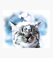 Snow Cat  Photographic Print