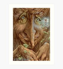 Old Wisebark Art Print