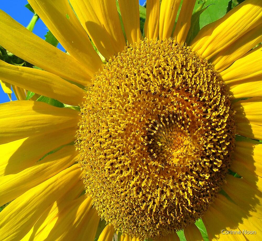 Sunflower by Corinne Noon