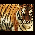 Tiger Tiger by MichelleRees