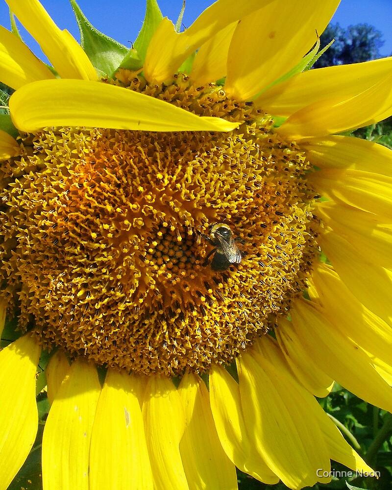 Big Sunflower by Corinne Noon