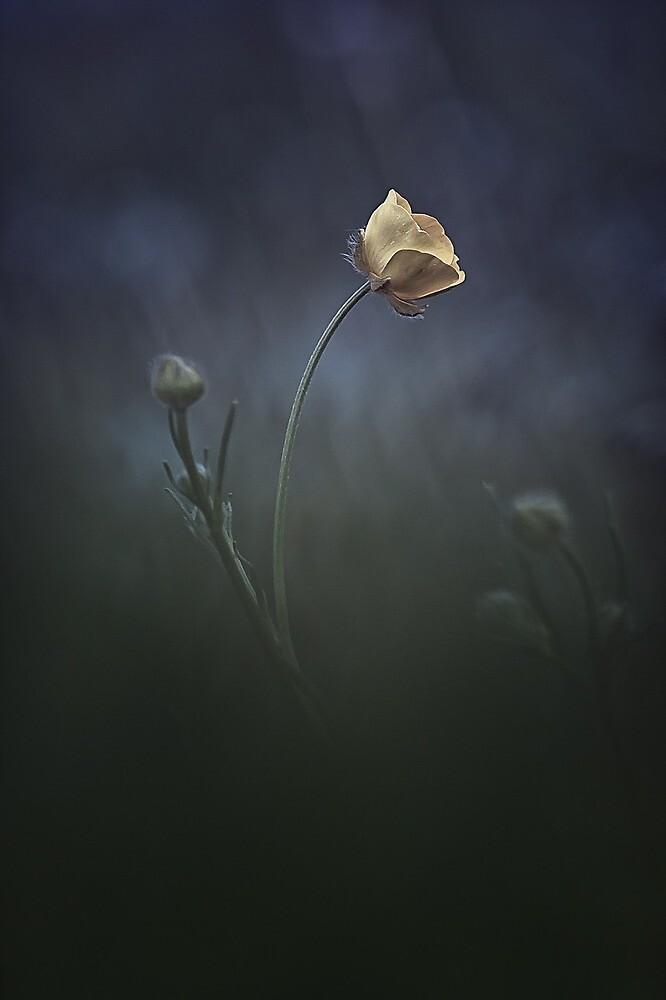 Flower by Achmen
