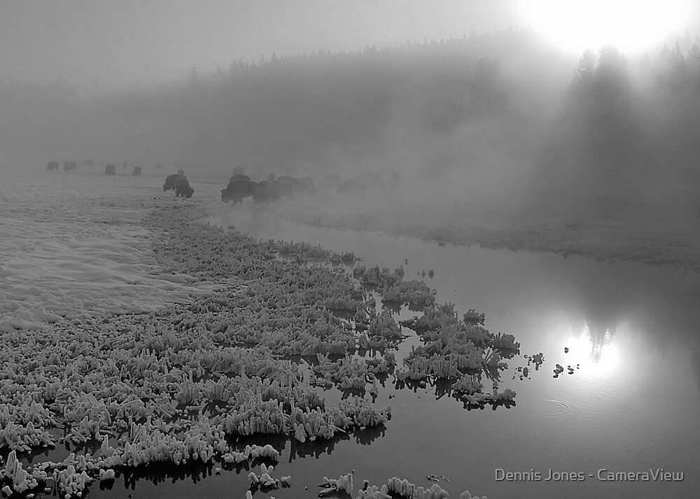 Buffaloes in the Mist by Dennis Jones - CameraView