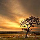 0272 Stormy Sunset by Hans Kawitzki